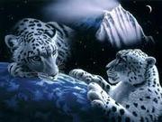 O Tigre Branco