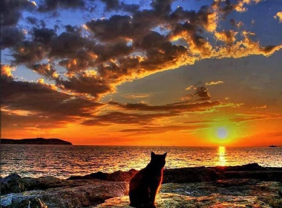gato admira