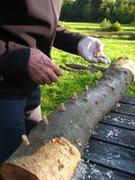Marvelous Mushrooms: A Shiitake Log Cultivation Workshop