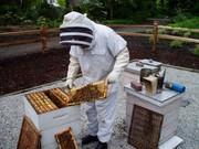 Back Yard Beekeeping