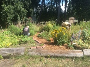 *Spice Up Your Garden with Garlic! (by donation; FREE for seniors)
