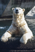 The Stanley Park Zoo Historical Walking Tour