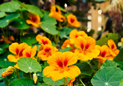 Hanging Baskets for Beauty and Bounty