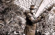 Парка - Княз Фердинанд в оранжерията  2