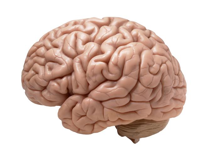10_ფაქტი, qwelly, ეს_საინტერესოა, საკითხავი, ტვინი, ფაქტი, interesting, brain, facts, ფაქტები