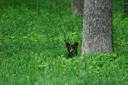 cubs 219 cades cove