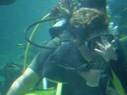 Shark Bait Boys Sea World Dive - 12-14 Dec 08 Dive 2 050