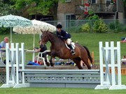 Champion Aurora Horse Show Time for Play owned by Linda Weldon, ridden by Trisha Drew