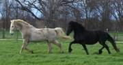 Susie's herd 2009