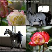 Roses and Horses