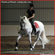Chantelle and Dinamico, schooling with a smile