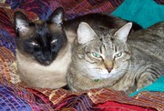 Perry Winkle and Tiger Lillie