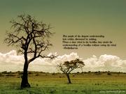 Bodhidharma - Clear Mind