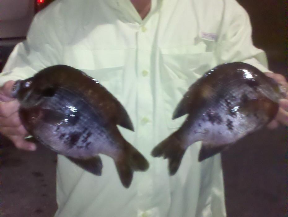 wewa fish
