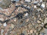 chain and rope found in saquaro lake 003