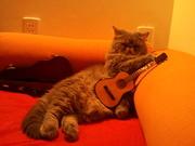Ling-Guitar 003