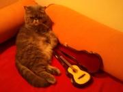 Ling-Guitar 001