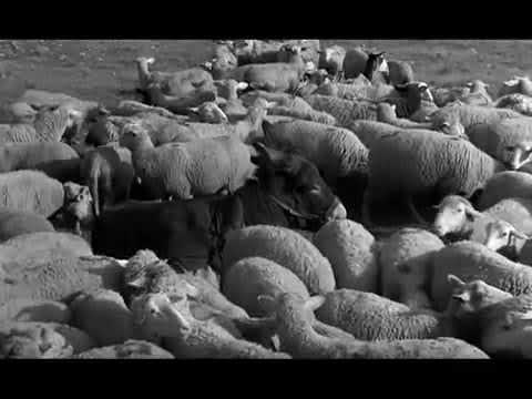 Au hasard Balthazar - Ending Scene - Robert Bresson (Movie Clip)