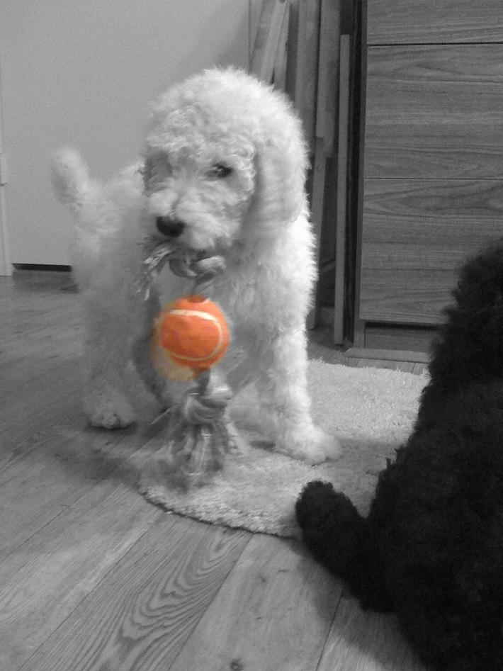 Fetch!!
