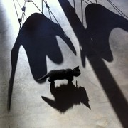 BKF chairs with kitten