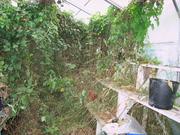 Overgrown glasshouse 28/2/09