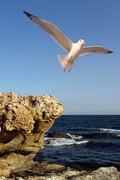 Η απογείωση (Παραλία Αβδήρων)