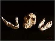 Φυσική Ιστορία και Αρχαιότητα