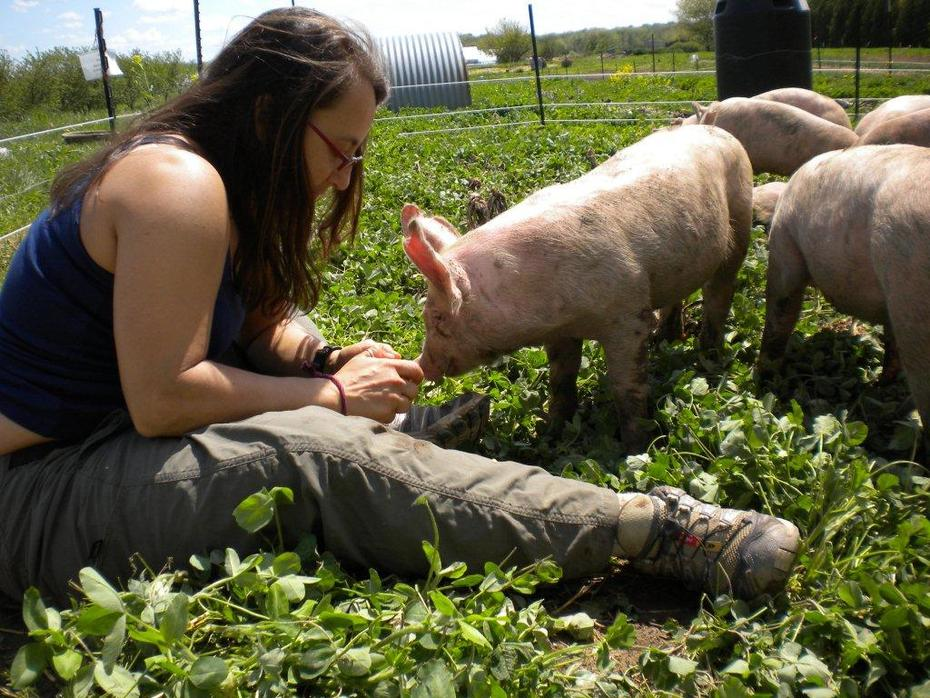 me-pig babies