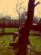 თბილი ხე
