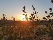 მზის ბაღები