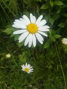 უცნობთა შორის უცნობი ყვავილი