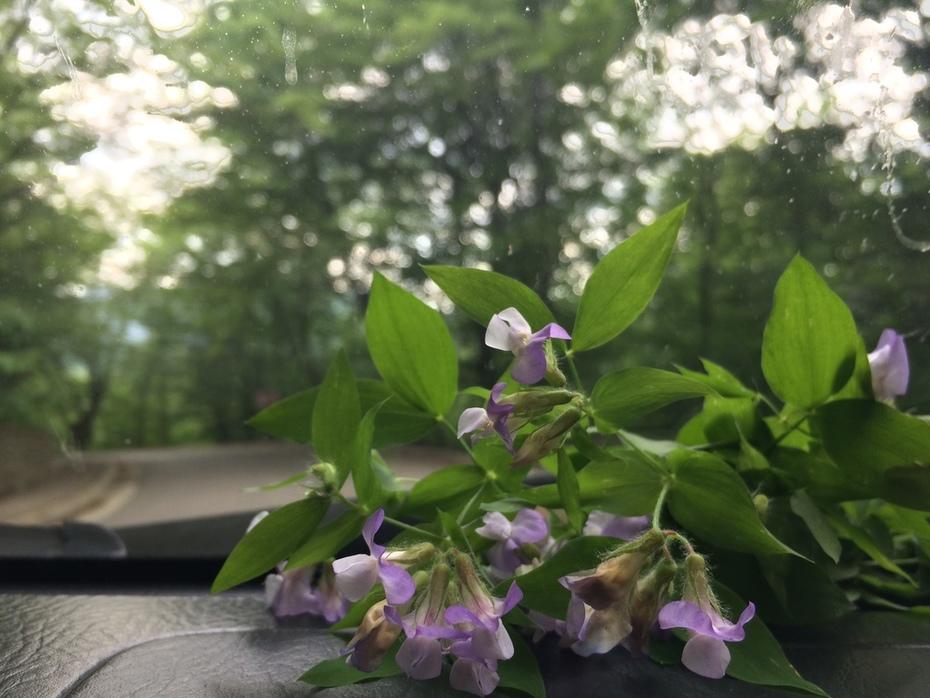 მგზავრი ყვავილები