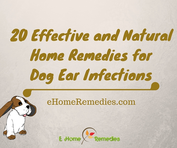 20 Effective and Natural Home Remedies for Dog Ear Infections