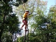 High Wire Walker