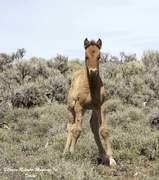Carter Reservoir Wild Horses