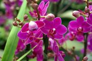 orchid-photo-02272_high