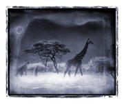 giraffe under blue moon