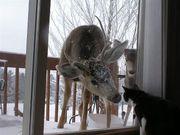 attack cat