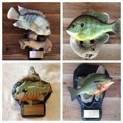 Panfish collage