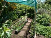 Spring Garden.Nov.2011 007