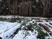 snow covered garden beds