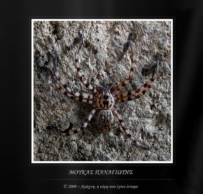 Αράχνη, η κόρη που έγινε έντομο