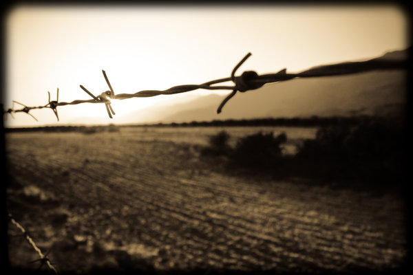 barbed wire dreams