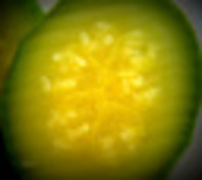 cucumber or pumpkin...?