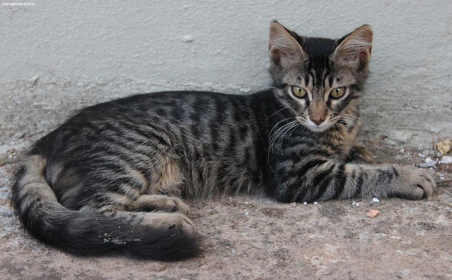 Γατάκι #1