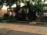 Swarthmore Ave tree problems