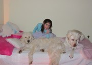 Lexi Sharing Bed with Clover & Apollo