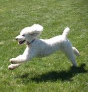 Bella running