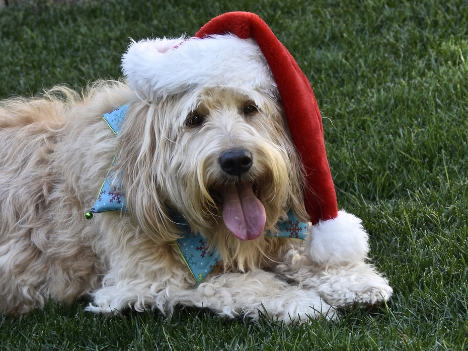 MERRY CHRISTMAS FROM CLANCY