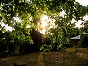 მზის ამოსვლა სოფლად